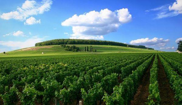 Burgundy - Stefan Bauer pod CC